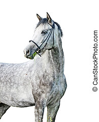 grey around horse isolated