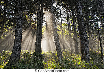 Power of the Godly Rays - Sun rays shining though to the...