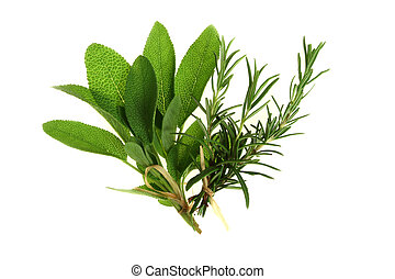 Herbs - Sage and rosemary - aromatic herbs