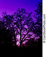Twilight Tree - Trees at twilight