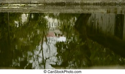 tree and house scene reflex in pond,wave on water surface.