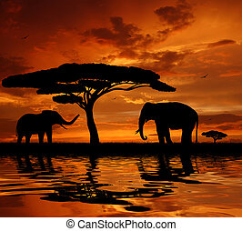 elephants in the sunset - Silhouette two elephants in the...