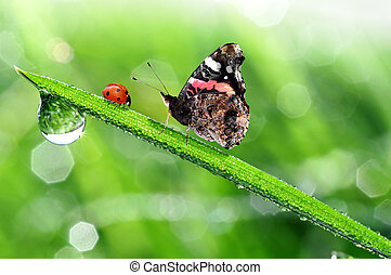 ladybird and butterfly - fresh morning dew with ladybird and...
