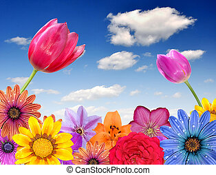 floral background with blue sky