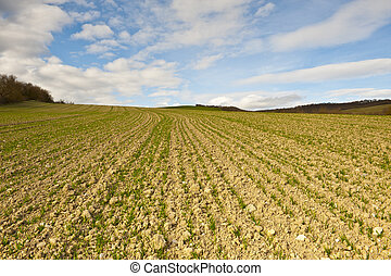Plowed Field - Freshly Plowed Field in Spring Ready for...
