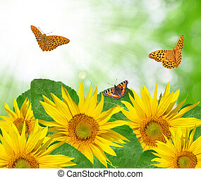 sunflower with butterflies on green background