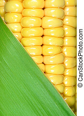 corn closeup  - corn with leaves  closeup