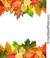 autumn leaves - colorful autumn leaves isolated