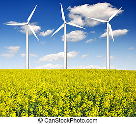 rapeseed field with wind turbine