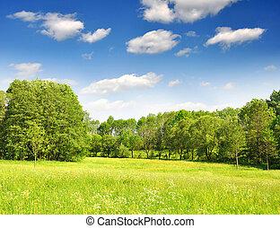 primavera, paesaggio, -, ceco, repubblica