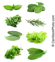 Collage of green and juice spice on white background