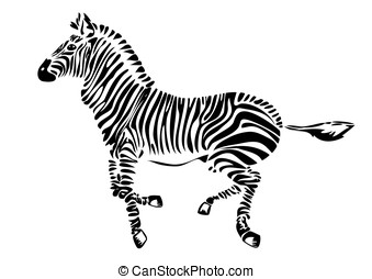 running zebra - vector - Vector illustration of the zebra -...