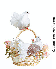 Doves on a basket - Two white doves alight on a basket with...