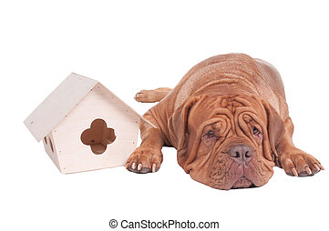 Dog with a starling house - Tired dog is lying next to a...