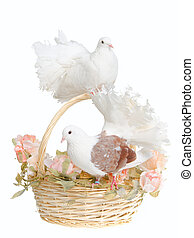 Doves and a basket
