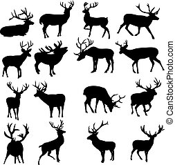 Wild deer. Deer on a white background