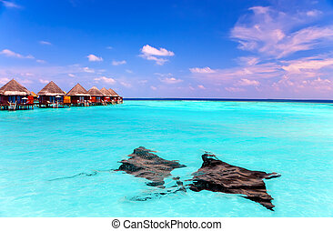 Island in ocean, overwater villas and a eagle ray...