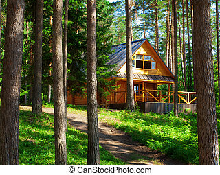 House - Log house in the forest