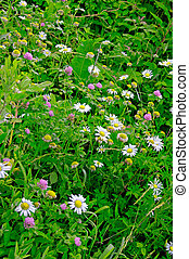 Texas wildflowers - wild wild flowers of different colors in...