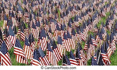 Field of Flags Loop - Loop features a field of US flags...