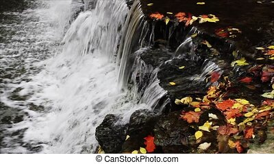 Leaves and Falling Water Loop