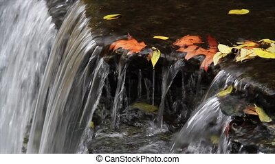 Waterfall and Leaves Loop