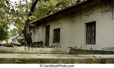 swing tree and house In courtyard,nostalgic windows,Vine
