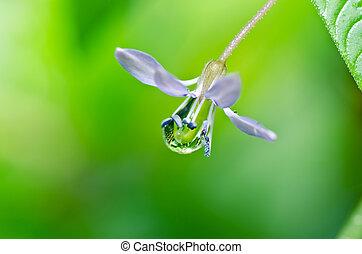 水, 花, 緑, 低下, 自然