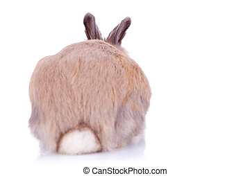 back view of a cute brown little rabbit, on white background