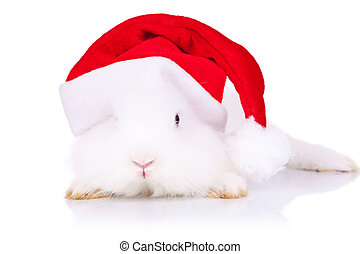 santa bunny looking to the camera - curious little santa...
