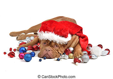 Santa dog with Christmas decorations, isolated