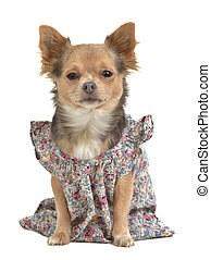 Dog with stylish gown