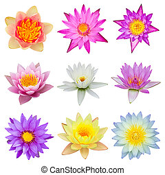 collection of water lily isolated