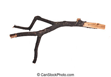 Stick or twig, isolated on white background