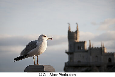 Seagull and Swallow's Nest, Crimea, Ukraine - Seagull with...