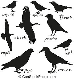 birds - A set of silhouettes of different birds in black
