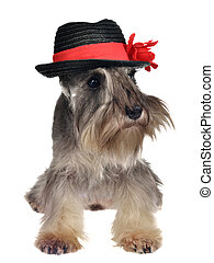 Dog with hat isolated