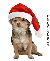 Santa dog with red hat