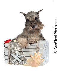 Dog with old treasure chest