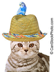 Cat and bird isolated