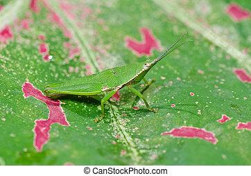grasshopper in green nature