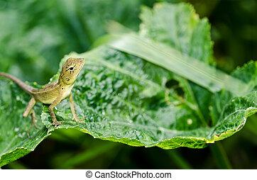 lagarto, verde, naturaleza