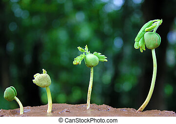 Plant growth-Baby plants - Plants growing from soil-Plant...
