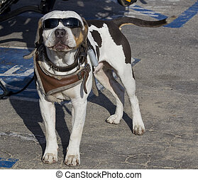 dog with sun glasses at the beach