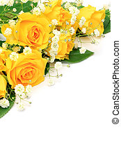 yellow rose - I took yellow roses in a white background