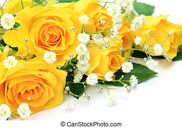 yellow rose  - I took  yellow roses in a white background.