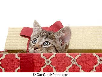 Cute kitten in Christmas basket - Cute tabby kitten inside...