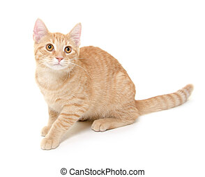 Yellow cat on white background