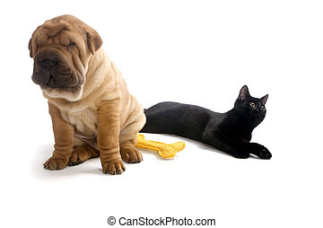 Sharpei puppy and Cat isolated on white