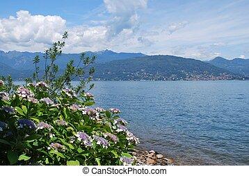 Lake Maggiore - Panorama of Lake Maggiore and hydrangea...